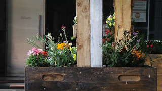 Bright Flowers in Wooden Planters