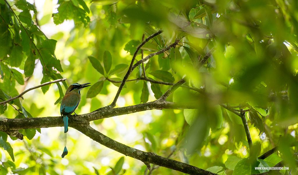 Costa Rica 28