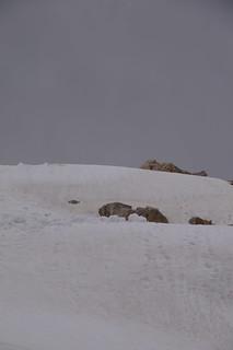 062 Wandeling door de sneeuw