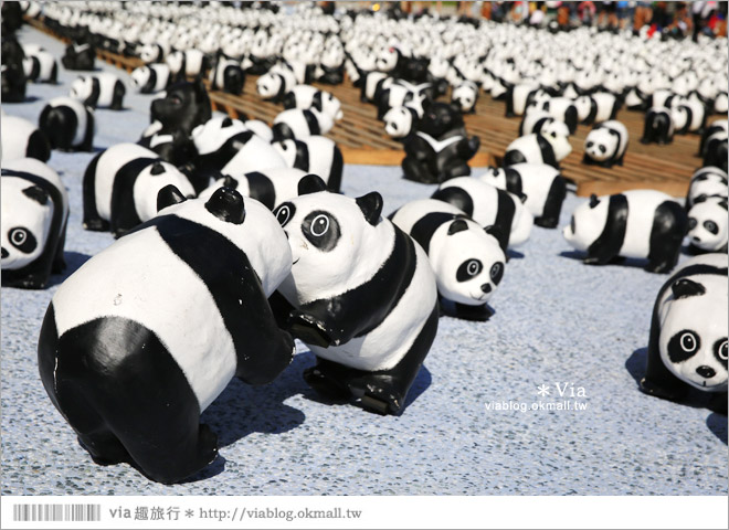【台中】大都會歌劇院~可愛紙熊貓大軍來襲!台中七期的新亮點!12