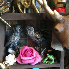My Shadowbox: Menagerie