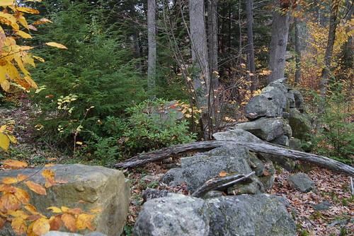 grater-woods-DSC03853
