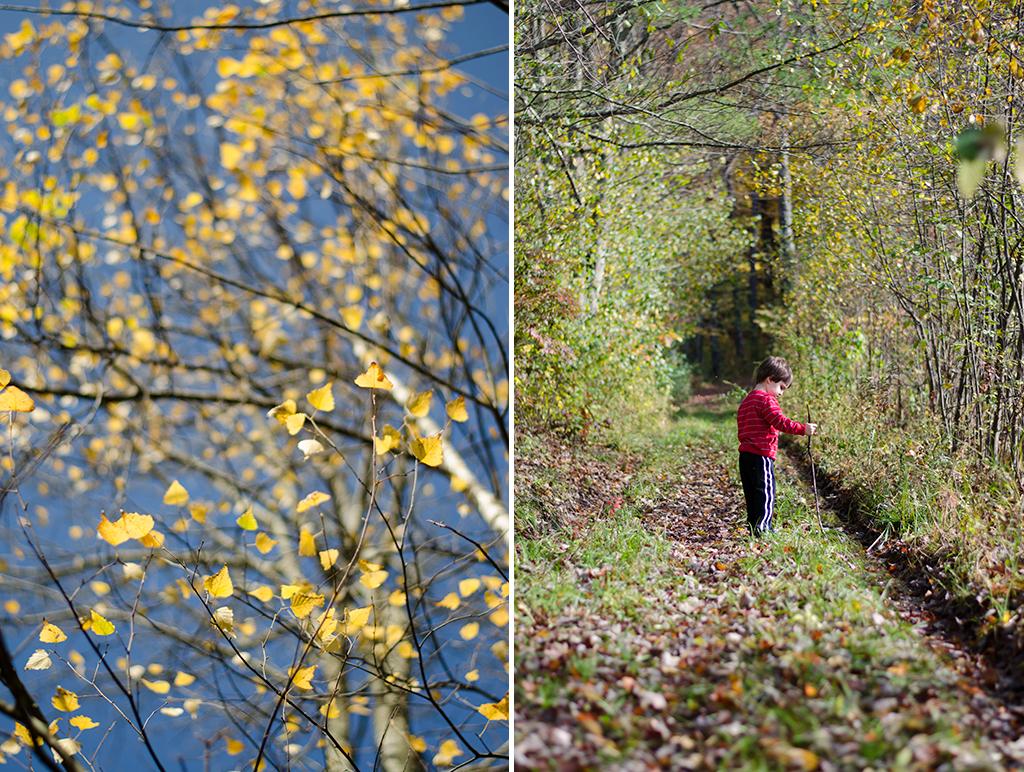 peak foliage collage 2