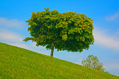 blue ireland sky inspiration plant tree green nature weather canon landscape outdoors outdoor hill ngc best dreams cavan incredible lonelytree beautifulscenery welltaken beautyearth earthcaptures