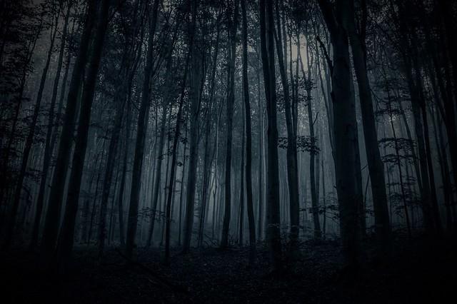Dark forest...
