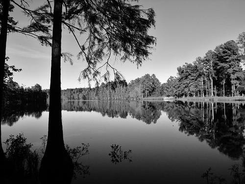 statepark blackandwhite reflection pond northcarolina springlake millpond natureconservancy cumberlandcounty northcarolinastateparks 2013 northcarolinastatepark longvalleyfarm northcarolinadepartmentofparksandrecreation carverscreekstatepark jamesstillmanrockefeller
