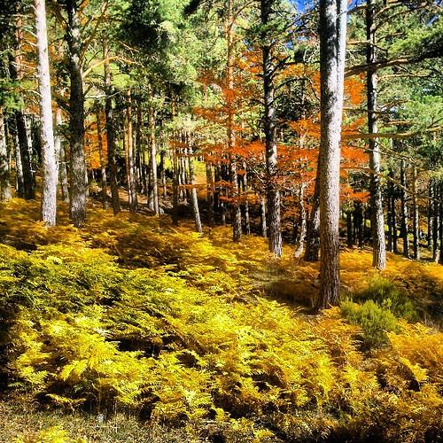 El #otoño en los picos de #Urbion #sorianatural #fotonatura #findeconamigas