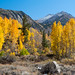 Fall in the Eastern Sierra by john_h_moore