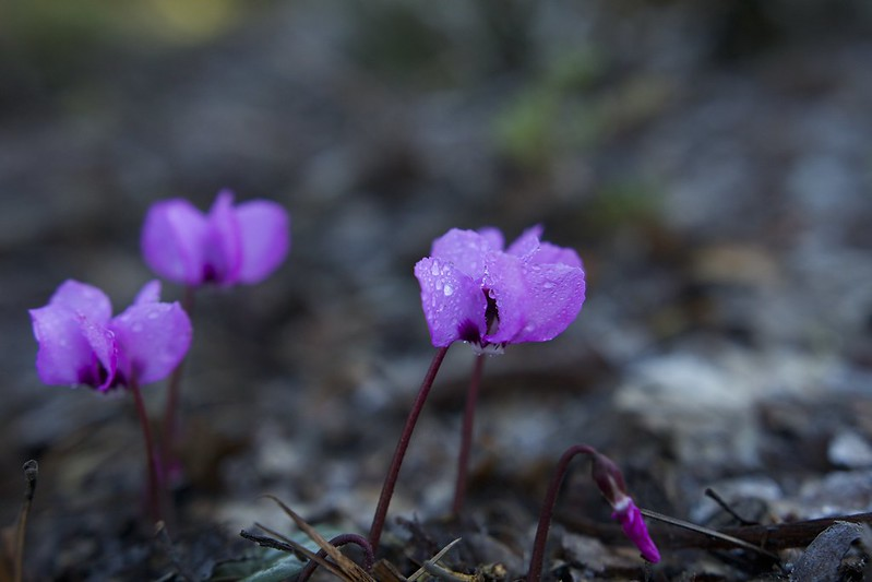 © Amie Whiting_2014_Winter Morning Heather Garden_12