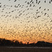 Epic bird migrations