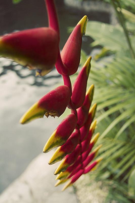 Costa_Rica_185