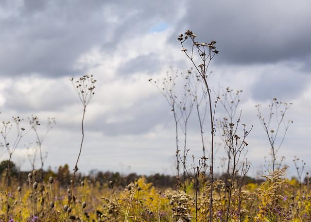 Dead Weeds