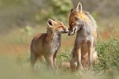 animal family016