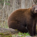 Black Bear Workshop_2014_10_19