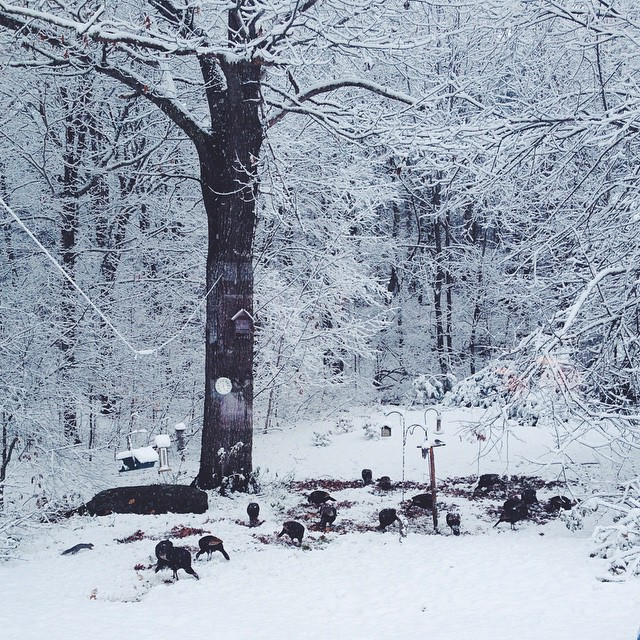 Turkeys in the snow. #207gram