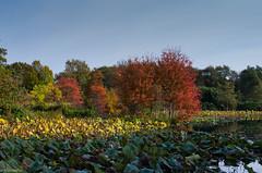 Herbst im Arboretum