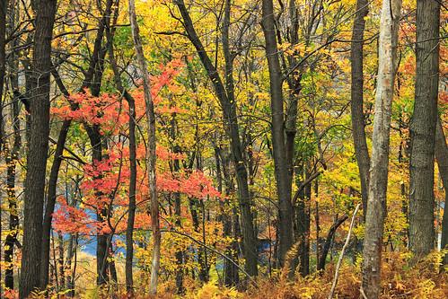 autumn trees nature forest hiking pennsylvania foliage creativecommons deciduous bluemountain appalachianmountains kittatinnymountain carboncounty lehighgap lehighgapnaturecenter temperatedeciduousforest
