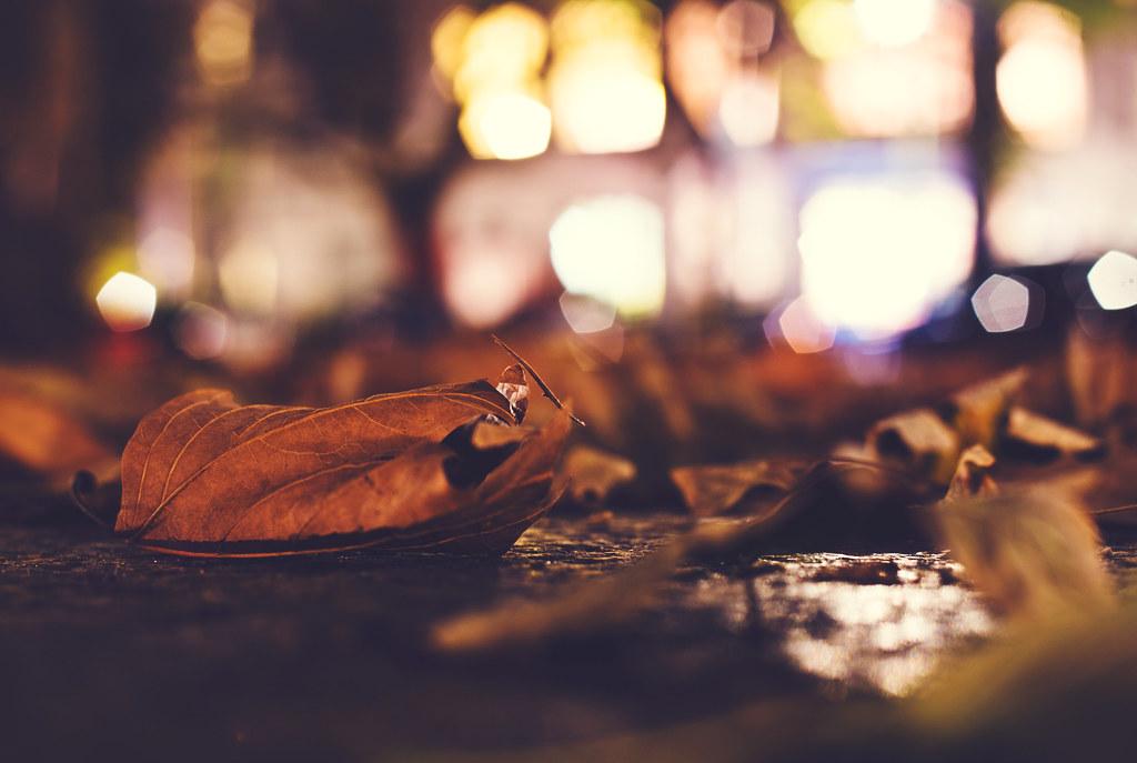 113/365 - dead leaf