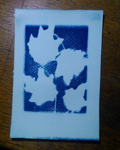 9.  Cyanotypes - Leaves