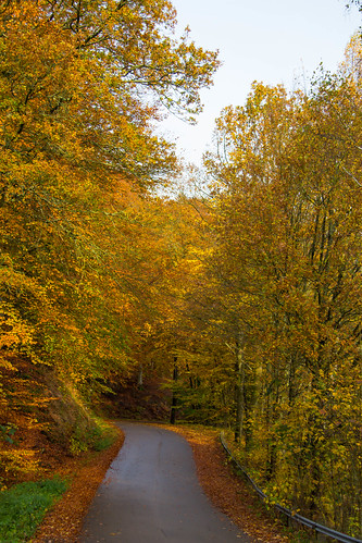 Autumn road (Explore 2014-10-27)
