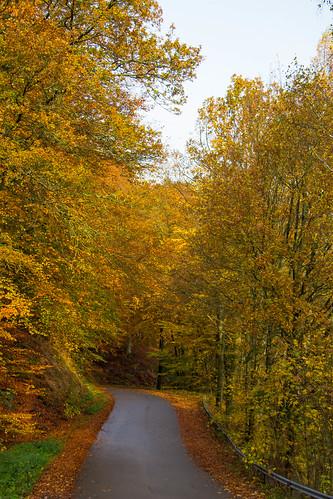 Autumn road (Explore 2014-10-27)