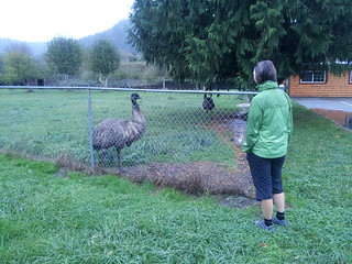 Caroline and the emus