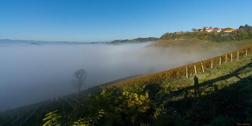 autumn fog österreich nebel sony herbst vineyards 1018 steiermark oss 2014 weinberge südsteiermark berghausen weingärten southstyria sonynex nex6 zieregg