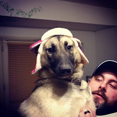 Found a dog trapper hat at Target. Rynna is very not sure. #GSD #germanshepherddog #husky #shepsky #dogsinhats