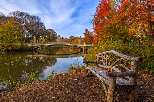nyc newyorkcity bridge autumn newyork fall leaves clouds reflections bench landscape cityscape centralpark fallcolors clearsky bowbridge pedestrianbridge thelake theramble clearday tiltshift fredericklawolmsted rusticbench newyorkcitylandmarks classicalgreek adoptabench castironbridge jacobwreymould tse17mmf4l canon5d3 strykapose calvinvaux