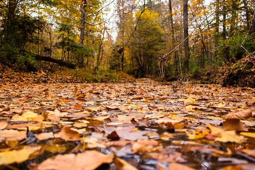 fall creek canon eos hawriver chathamcounty canoneos400d canoneosdigitalrebelxti canonefs1855mmisstm