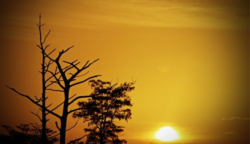 trees tree silhouette sunrise golden florida sandhillcrane palmbeachcounty