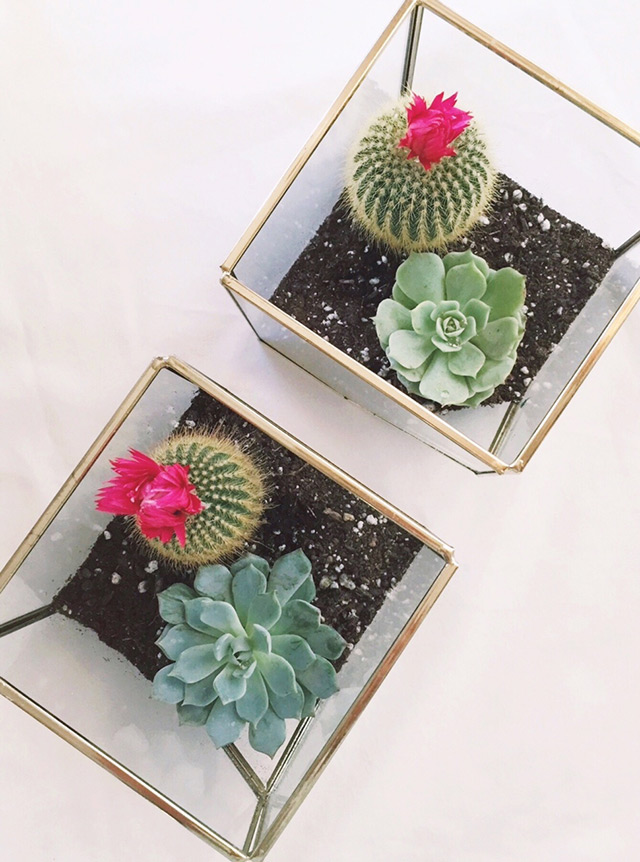 diy mini terrarium, home depot succulents, cactus with pink flower, gold geometric terrarium