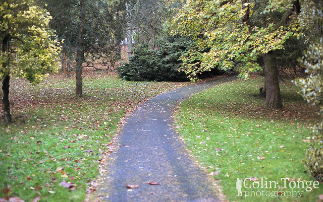 The Forrest Path