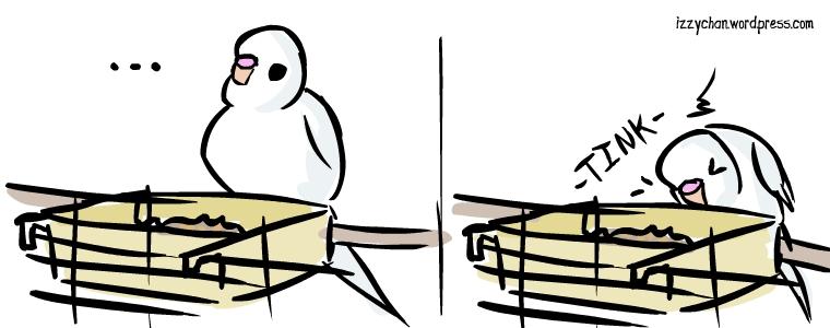 white bird danger bird budgie tink drum