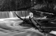 Cramond Waterfall, Cramond Edinburgh 20th November 2014