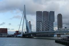 Erasmus Bridge @ Nieuwe Maas @ Rotterdam