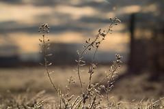 In a frosty world