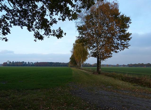 Landscape near Burlo-Vardingholter Venn, Panasonic DMC-FZ150