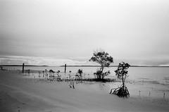 Fraser Island - Ilford Delta 100 film
