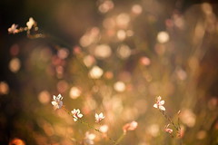 Blossom Dance