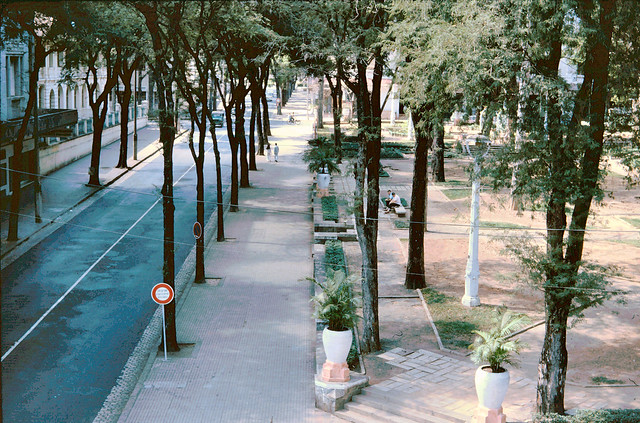 SAIGON 1965 - Tu Do Street was lined with tamarind trees. Photo from the Alfana Hotel. Photo by John Hansen