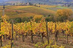 Tuscany - Chianti wineyards in the autumn