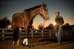 20141109_CelineBurch-HorseShow@Houston_0472-p-s