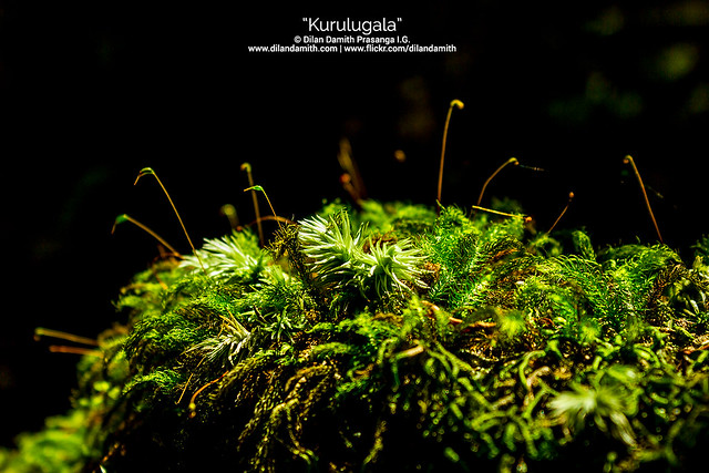 Dilan Damith Prasanga's - Wonders of the nature......
