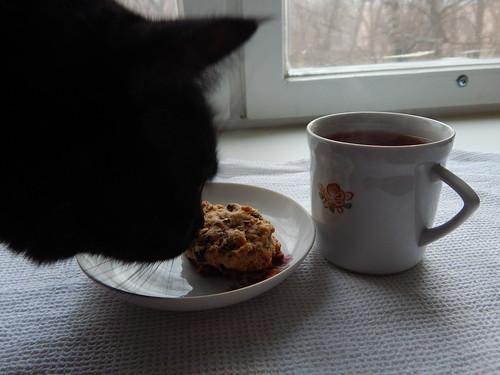 кот тырит печеньку с чаем утром