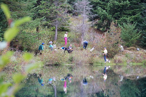 Gold Creek Planting Party, Oct. 4th near Snoqualmie Pass