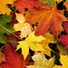 Autumn-Leaves-Wallpaper by nexussix