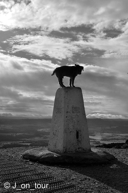 Dog Trig  GJC_014542 - Version 2