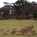 Small photo of Monarto Zoo South Australia. Eland.