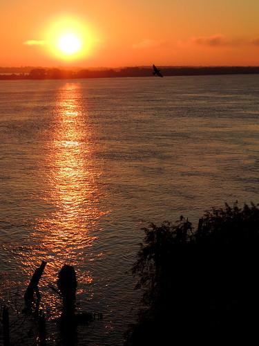 dawn amanecer aurora rosario golondrina parqueespaña rioparana diegostiefel